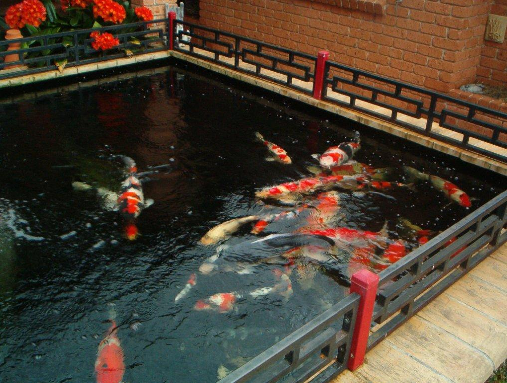 all care ponds pond builder pond maintenance koi